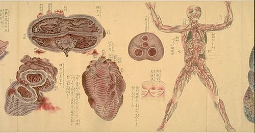 Japanese-anatomy-3