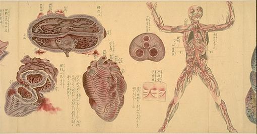 Japanese-anatomy-3